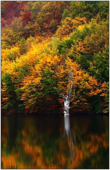 Метаморфозы природы - живые и неживые цвета - осень в Крыму