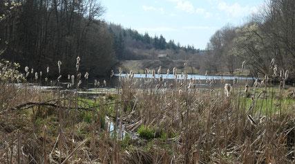 Sulzbachsee (NABU)