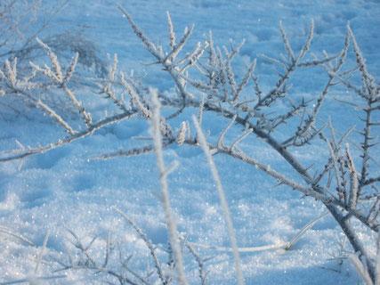 Winter auf Usedom, Rauhreiflandschaft
