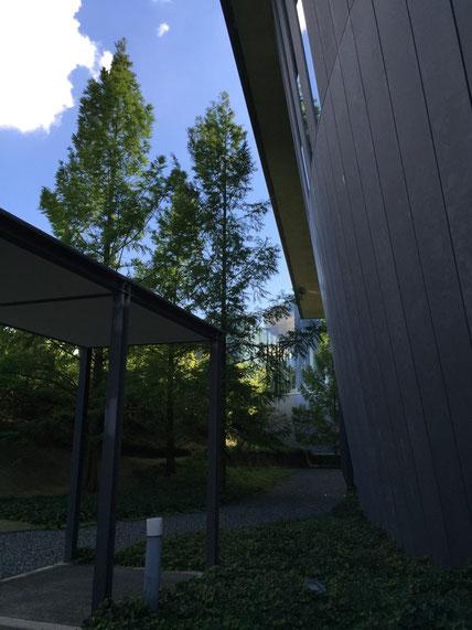 緑の中にある黒い建物が印象的。建物に負けないボリュームになる様にメタセコイアが植栽されている。