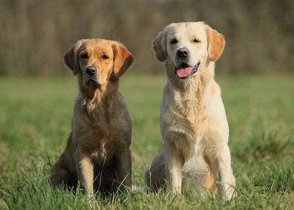 Sam mit seiner Schwester Enya, die auch erfolgreich die JP/R am folgenden Prüfungstag absovliert hat.