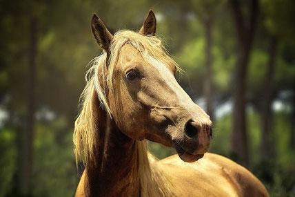 Ihre Pferdemetzgerei und Pferdefleisch - Lieferant im Aargau und der Region Luzern