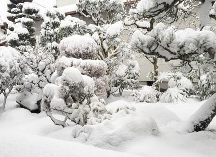 庭に雪が積もりました
