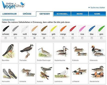 zum Online-Vogelführer...