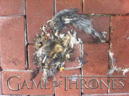 Game of Thrones van HBO, lees erover op de serie blog op www.studiolasogne.nl