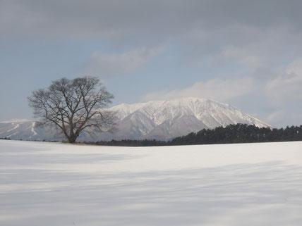 1月17日 14時頃 岩手山と小岩井農場の一本桜