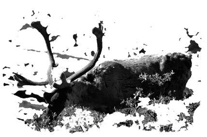 Alaska_2_Reisefotograf_Abenteurer_Jürgen_Sedlmayr_103