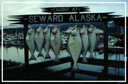 Alaska_1_Reisefotograf_Abenteurer_Jürgen_Sedlmayr_27