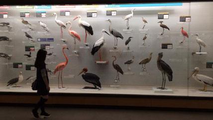 鳥の博物館。たくさんの展示です。