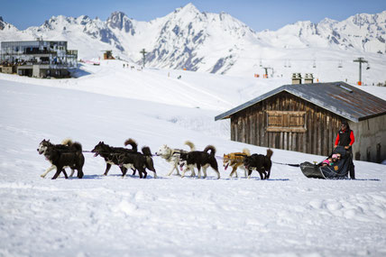 Dog sledging in La Plagne