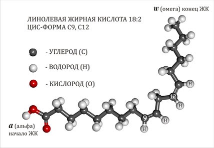 линолевая жирная кислота, омега-6