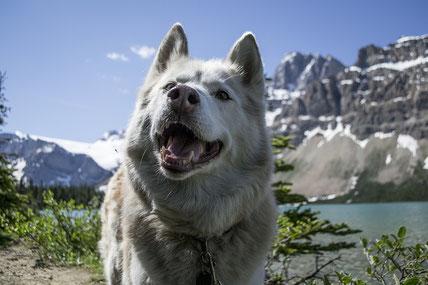 hond met zelfvertrouwen