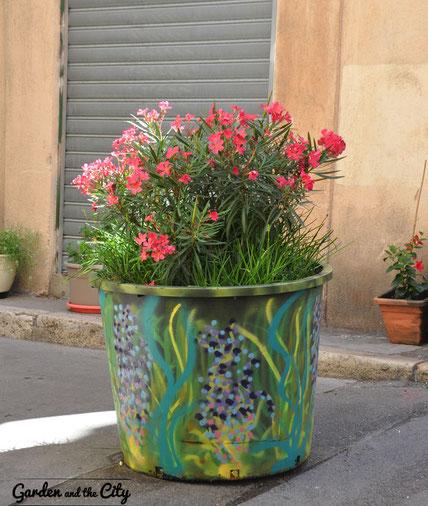 Laurier rose cultivée dans une poubelle peinte à Marseille