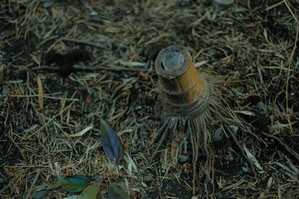 足元に誰かが残した古い竹の切り株