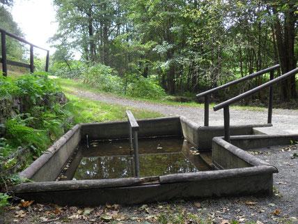 Wassertretbecken am Eckhardt-Teich