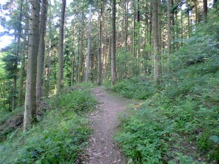 Ein schöner schmaler Pfad durch die Tannenwälder
