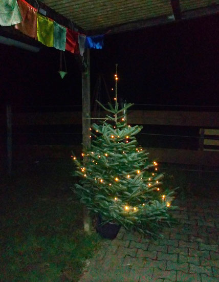 Unser Stall-Weihnachtsbäumchen