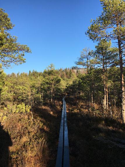 Und ein letztes Mal: Schwedens wunderschöne Natur