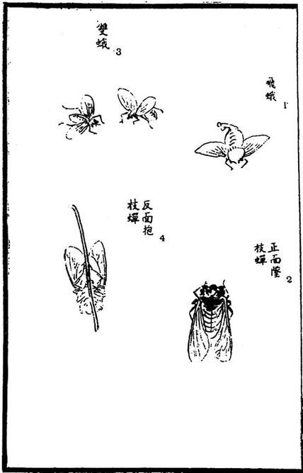 Papillons de nuit ; cigales. Henri Focillon, Le Livre des Magiciens