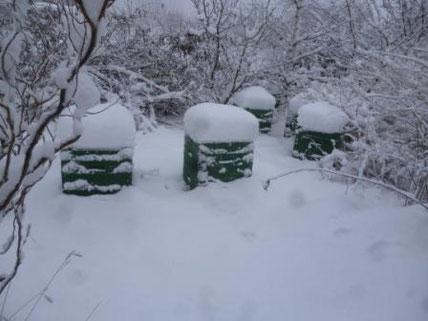 unsere Bienenvölker im rauen Harzer Winter (hier nur mit wenig Schnee)