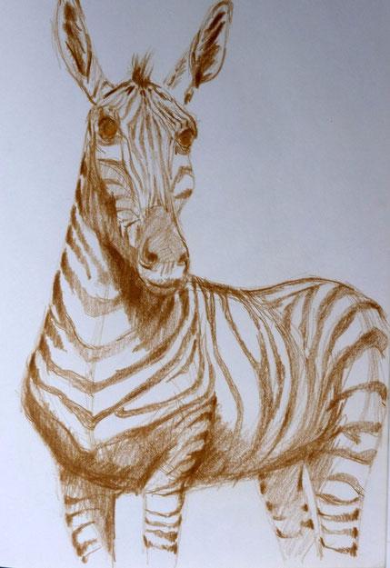 Zebra 2005 (Farbstift)