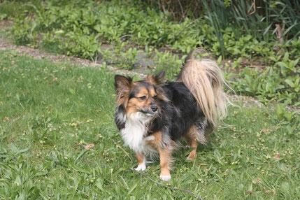 2014 kam Chico aus Andalusien zu uns. Er ist unser Gute-Laune-Hund und Seelentröster.