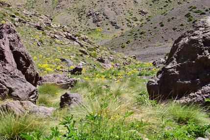 Habitat, Djebel Angour, Haut Atlas central, ©Frédérique Courtin-Tarrier
