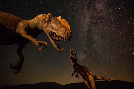 Dinosauriersafari - Dinosaurierer Nachbildungen