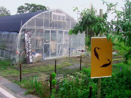2012年5月2日~20日の短い施工期間内に、新しい塩ビ管方式のアクアポ二クス水耕栽培ラインの常設展示設置を開始しました((有) スギタ設備さん)。