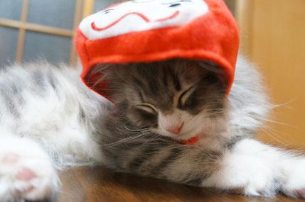 かぶりものする猫