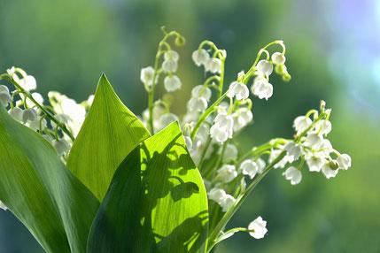 白い花瓶に生けられた紫と赤のブルームの花。