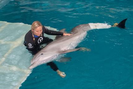 """Camille und Delfindame Winter, der einzige Delfin weltweit mit einer Schwanzflossenprothese. Ihre Rettungsgeschichte wurde sogar mit """"Mein Freund, der Delfin"""" verfilmt und lief in Kinos weltweit."""