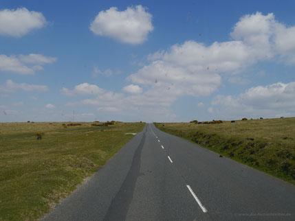Einsame Straße im Dartmoor Richtung Princetown, flankiert von Wildpferden