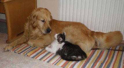 Die Fotovorlage für das Hunde-Katzen-Gemälde (Foto: A.Mohr)