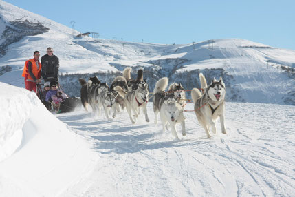 Saint François Longchamp top things to do - Ride sled dogs - Copyright SFL