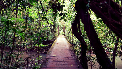 Pont suspendu au Rio Celeste