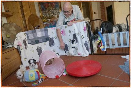 unsere Biewer-Yorkshire-Welpen haben Spass mit neuen Spielzeugen