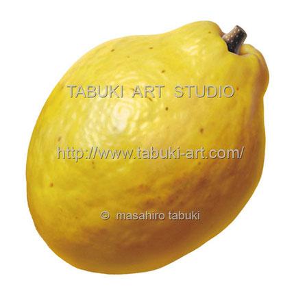 花梨イラスト カリンの実 フルーツ 完熟 素材イラスト レンタル