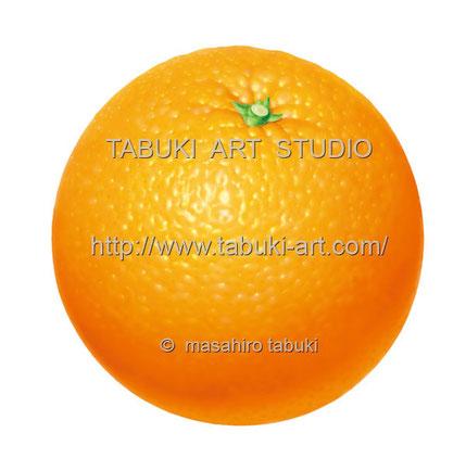 オレンジイラスト orange illustration