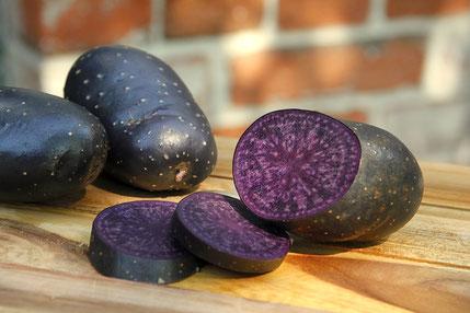 Violetta - festkochende Kartoffel