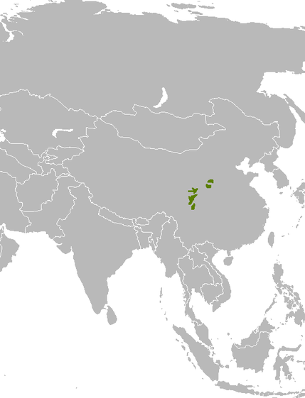 «Mapa distribuicao Ailuropoda melanoleuca» par User: IAMTHEEGGMAN — Travail personnel. Sous licence Domaine public via Wikimedia Commons - http://commons.wikimedia.org/wiki/File:Mapa_distribuicao_Ailuropoda_melanoleuca.png#/media/File:Mapa_distribuicao