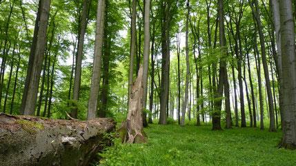 Blick in einen Wald bei Brakel ©WDR/LNU