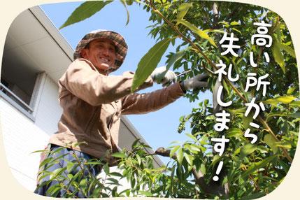 一般住宅の庭木の剪定・お手入れをする浜松市の植木屋・庭師 門西 豊(もんざい ゆたか)