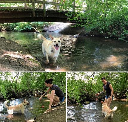 Badeplatz für Hunde direkt beim Campingplatz
