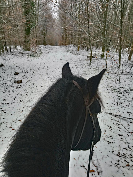 Willi und ich im Schnee