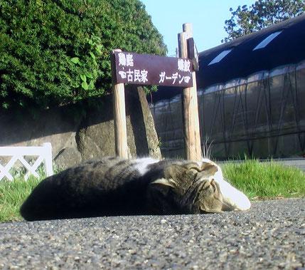 多くの猫たちの集うささやかなガーデン