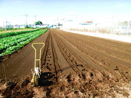 今年の麦播きは11月2日と3日。はだか麦の大石モチと農林61号小麦。今年の収穫の反省を基に来年は適期収穫するぞい!