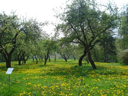Alter Apfelgarten am Weg zur Prinzeninsel