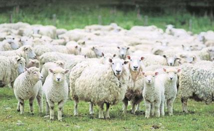 https://www.eluniversal.com.mx/ciencia-y-salud/salud/impulsan-productos-derivados-de-la-oveja