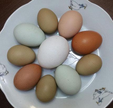 в тарелке яйца ухейилюй, маран, амераукана, брама, хайсекс